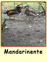 Mandarinente PS